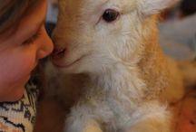 Baby Sheep dLana* / Pequeños y adorables corderitos