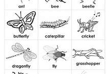 Bugs for Preschool