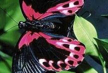 Natureza / Lindas imagens inspiradoras!!!
