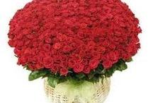 Valentine Special / Valentine Special / by Sanjeev Kumar