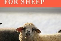Natural Sheep Care / Sheep are a popular farm animal and can enjoy a holistic approach to their health too! Get some inspiration here :)
