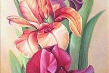 Flores -5