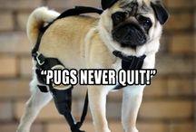 Aj's pug love