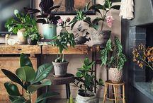 Life: Garden (Interior)