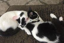 loving kitty