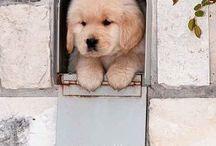 Perros que enamoran / Perros adorables que tan solo dan ganas de achuchar  #perros