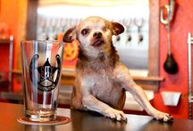 In DOG Beers I've only had 1