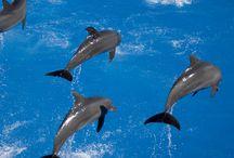 Natación de los delfines