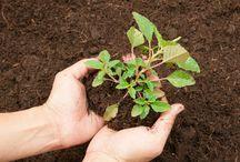 adubo para plantas organicos