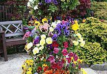 цветы/терраса