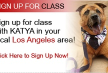 KATYADOGSROCK.com / KATYA DOGS ROCK! CHECK OUT KATYA'S DOG TAMING TIPS! / by Katya OF Katyamusic.com
