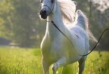 Pferde♡♡