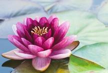 Flower / by Amanda Zito Tsingtao
