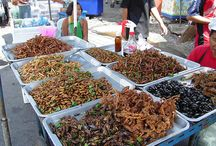 Food Stand_Insects