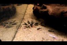 Videos acuariofilia - tuaquario.es / Vídeos del canal de acuarios de Youtube https://www.youtube.com/channel/UCOW6x4q2ypJFQeSIETHVDWg