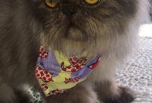Gatinhas amados Luna & Perigo / Gatos