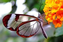 nature - butterflly