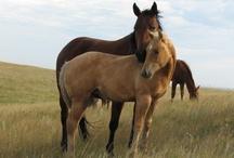 HORSE LOVE / by Cheryl Schoenfelder