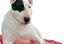 Dog Cool Products / スマイヌで販売中の暑さ対策犬グッズなどをご紹介させてください。