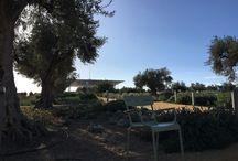 Stavros Niarchos Athènes / Un centre culturel à Athènes : fondation et jardins splendides
