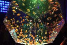 Art Aquarium HIROSHIMA