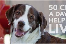 Animal Shelters and Havens /