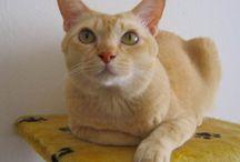 Cat owners AU
