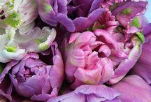 Flowerlandia