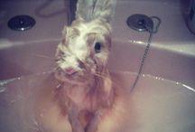 Bunny's world  / #conejos #conejitos #bunny #rabbits / by Reshi M. G.