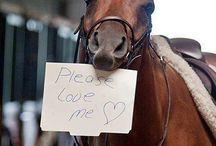 love Horses!?