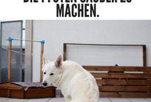 Hunde Erziehungs Tricks