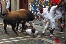 Bulls (toros) , San Fermin . Pamplona . Spain .