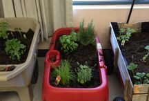 Plants and the classroom