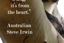 Era meglio nascere Koala