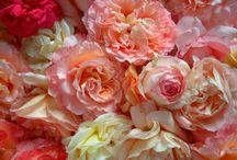 Roses / my favorites ♥