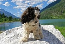 Red Rover Mascots / Have an adventure dog? Share those canine candids! This board is for you to share pics of your pups enjoying the great outdoors. If you'd like to be added as a contributor, just leave a comment on a pin on this board with the request.