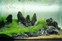 aquariym
