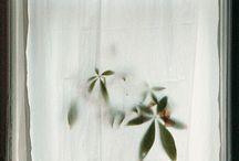 Plants Photos Poetry