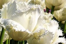 White Wonders / by The Blossom Shop