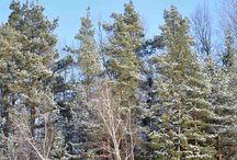 Wintertime by Landhaus / Wintertime by Landhaus
