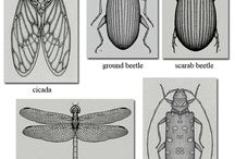 insect pencil drawings
