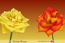 Dying flowers and plants