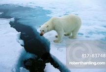 Climate Change Photos / Rising sea levels, higher humidity, disappearing sea ice and retreating glaciers are all clear indications that we live in a warming world.