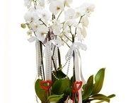 Paşabahçe çiçek siparişi / Paşabahçe çiçek siparişi vermek çiçek vitrini ile çok kolay.! http://www.cicekvitrini.com/cicekler/pasabahce-cicek-siparisi