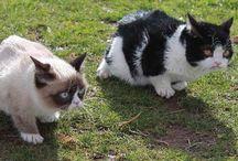Cats Meow