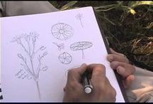Kreslení - příroda