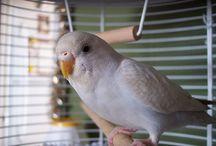 pet bird training