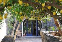 Backyard Mediterranean