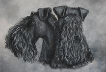 Kerry Blue Terriers, Boo-Ya!