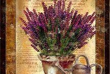 Dibujos flores y plantas